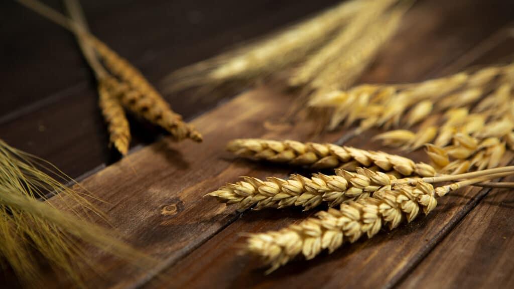 Lektion 03 - Aufbau des Getreidekorns